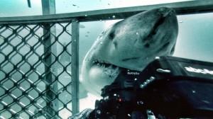 Shark Cage & Acrylic Ports-large