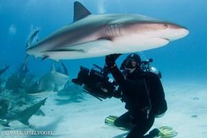 Becky Shark Belly