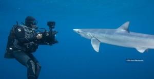 HH Blue Shark 8-3-2012