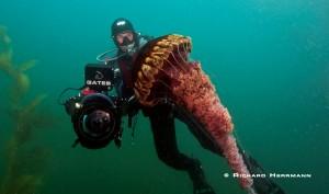 HH Sea Nettles