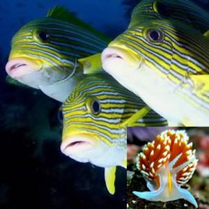 Versatile Fish