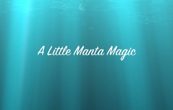 A Little Manta Magic