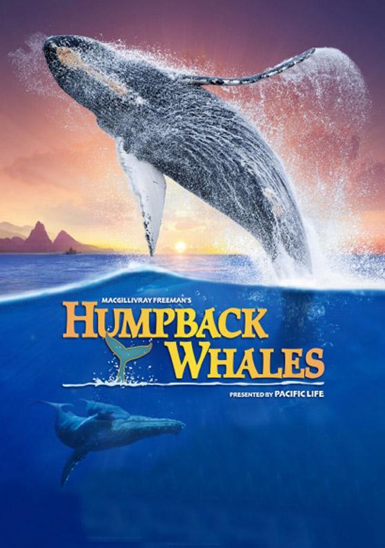 060 Humpback Whales MFF