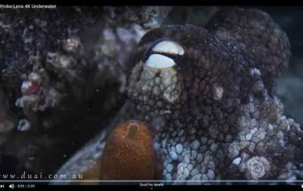 More MLA60 / Laowa Macro Probe Lens Video